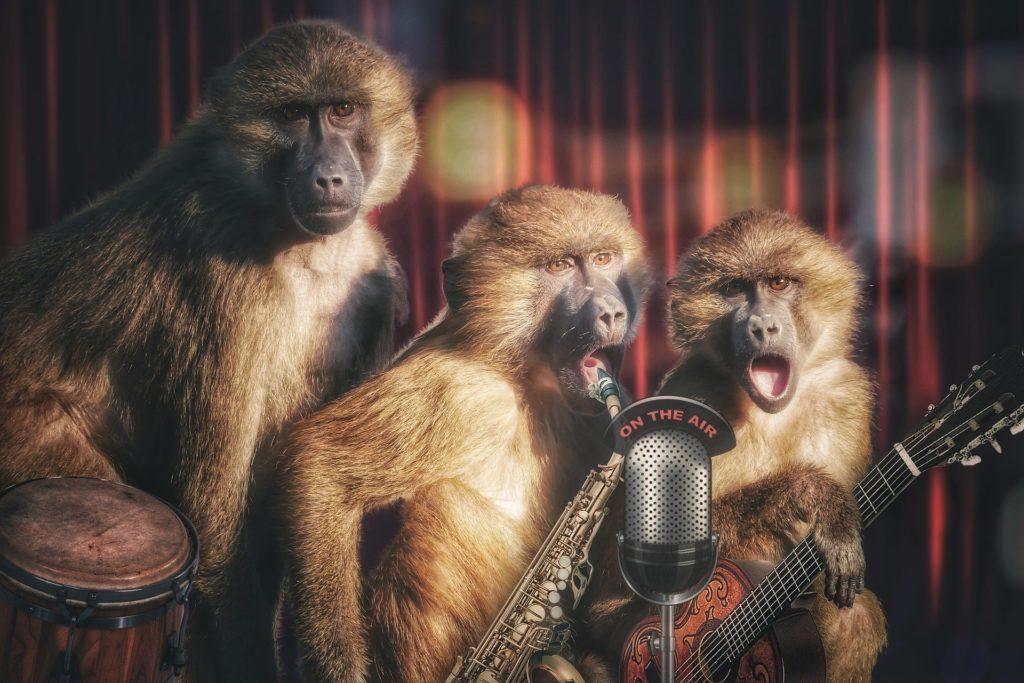 猿バンドの画像